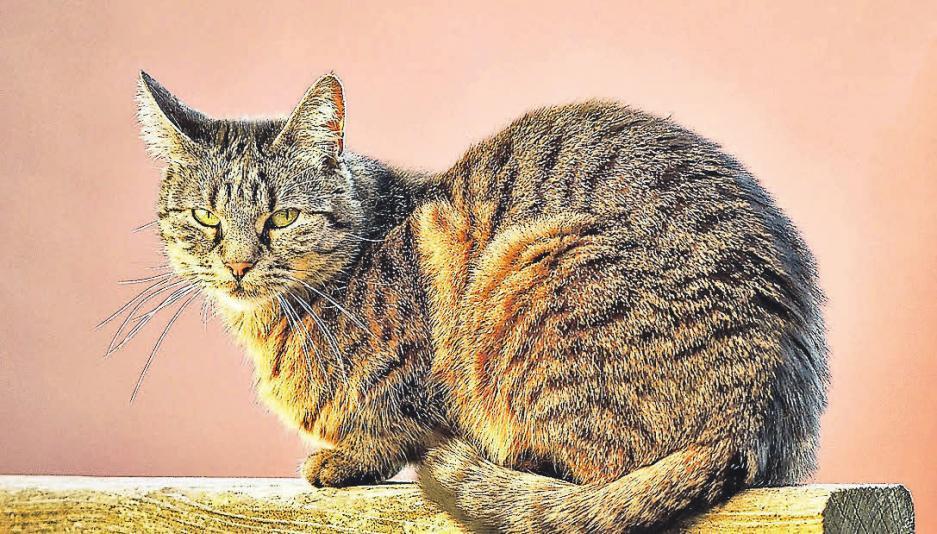 Katzen sind treue Begleiter und geben Senioren eine Beschäftigung.