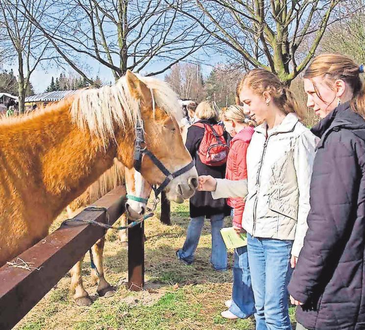 Schon seit 1980 organisiert der VVV die Burgdorfer Pferdemärkte.