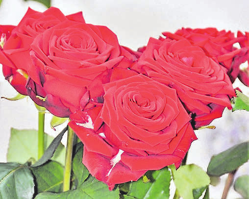 """""""Valentinstag - Sag es mit Rosen"""": Die Auswahl im Blumenfachgeschäft Lehmann ist riesengroß – nicht nur zum Valentinstag."""